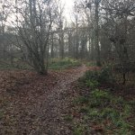 Forest Holidays Thorpe Forest Photo