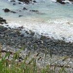 Roaring Bay Photo