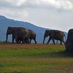 éléphant dans goal oya national parc