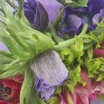 Somerset Flower Farm Foto