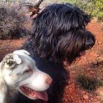 Pet Friendly Sedona and El Portal Sedona Hotel