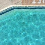 Dirt in pool