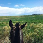 Colonia Horseriding Photo