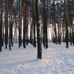 Serebryany Bor Image