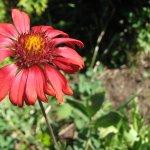 A gorgeous flower from Linden Gardens