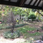 Garden outside the room window