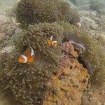 Aqua Vision Scuba Diving Foto