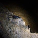 Bild från Boraga Limestone Cave