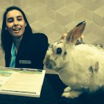 My rabbit, Narvik; makes friends with the wonderful desk staff.....