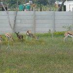 ภาพถ่ายของ Addo Wildlife