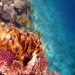 Fotografie: Club Reef Resort