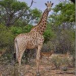 Photo of Rukiya Safari Camp