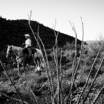 Ride through the beautiful Sonoran Desert on the back of our gentle mountain horses