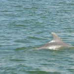 dolphin swims by
