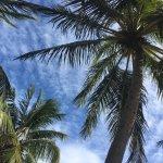 Photo de Tambaqui Praia