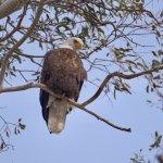Sacramento National Wildlife Refuge Photo