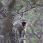 Foto de Tanda Tula Safari Camp