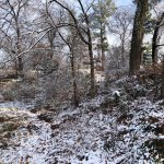 December Snow in the Park!