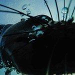 Seals love a good GoPro