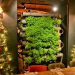 Зелень выращивается в самом ресторане