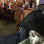 The interior view of the restaurant, as seen from the view of my pet rabbit, Narvik; in his stro