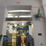 Giant insects greet visitors