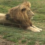 Seaview Lion Park Foto
