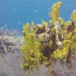 Elbow Reef