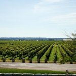Photo of Trius Winery