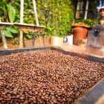 Fresh coffee being ground in the morning and guests can have a go at the roasting.