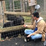 Volunteer coaxing a bear out of his den with fruit.