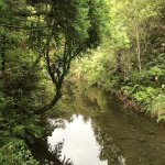 Photo of Wairua Lodge - Rainforest River Retreat
