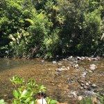 Foto de Wairua Lodge - Rainforest River Retreat