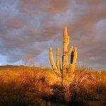 صورة فوتوغرافية لـ Desert Trails Bed and Breakfast