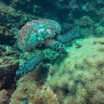 Valokuva: Aqua Vision Scuba Diving