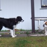 Freya (black and white) and Soley
