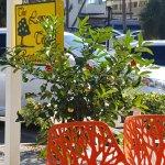 The Lemon Tree Foto