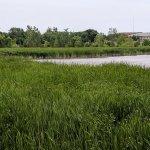Macatawa Marsh