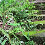 Love the moss and ferns....