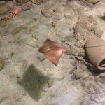 Photo of Aquarium Cap Blanc