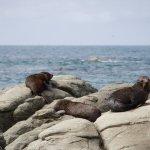 Seals along the coastline
