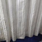 Fungus on Shower Curtain
