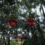 Photo de Chimelong Paradise