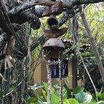 Photo de Waku Lodge