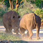 Photo de Morukuru Family Madikwe