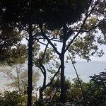 Views through the jungle trees to the sea