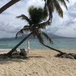 Palm tree and Nevis from Banana Bay Beach, St. Kitts