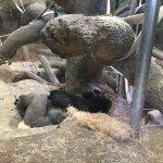 Foto de Como Park Zoo & Conservatory