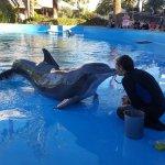 Photo of Siegfried & Roy's Secret Garden and Dolphin Habitat