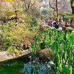 Wuhou Memorial Temple 45